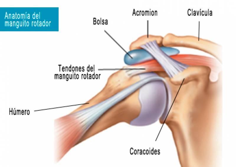 Qué es el manguito rotador? ¿Por qué duele el hombro?