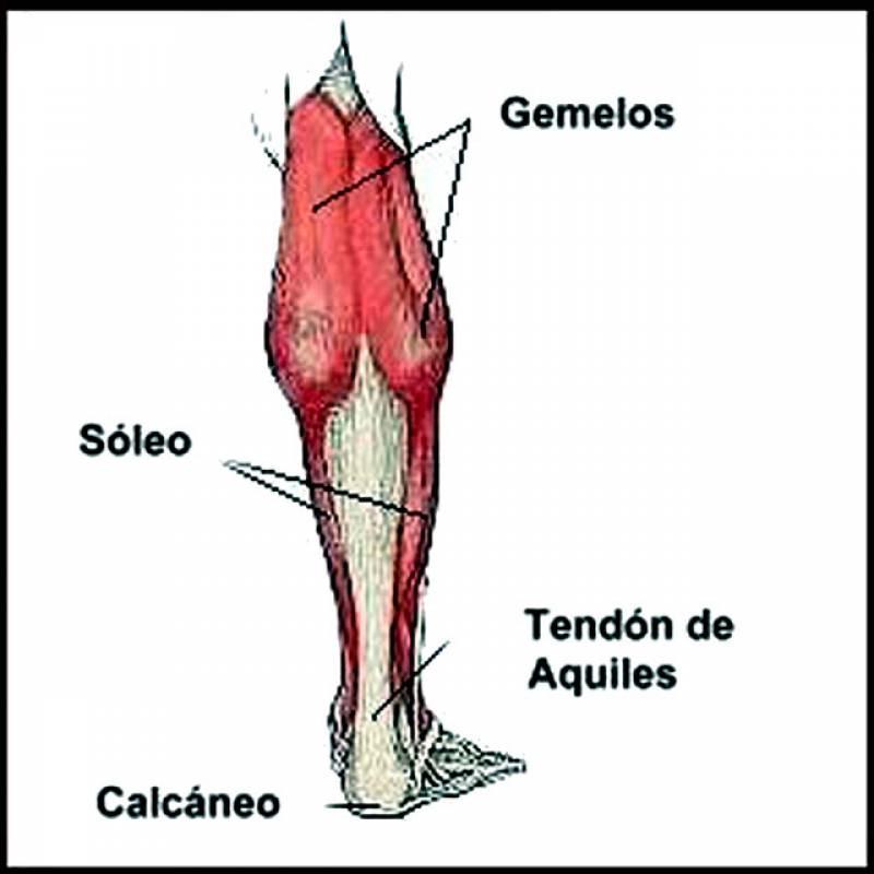 Los tendones no se lesionan de un día para otro 1c0b7c6d544e
